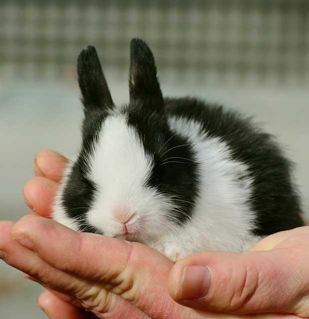 Bunny Rabbits - Essex Feed Warehouse